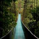 Подвесной_мост_в_джунглях_Коста-Рики (Копировать)