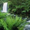 World_Australia_Hopetoun_Falls___Otway_Ranges___Victoria___Australia_008977_ (Копировать)