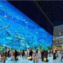 Dubai Aquarium u Discovery Centre (Копировать)