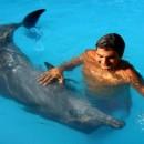 bali_dolphin_swimming (Копировать)