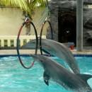 dolphin (Копировать)