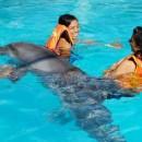 dolphin_swim (Копировать)