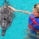 dolphin_swimming (Копировать)
