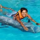 dolphin_swimming_2 (Копировать)