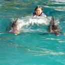 dolphin_swimming_3 (Копировать)