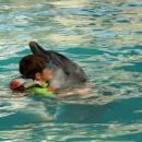 dolphin_swimming_7 (Копировать)