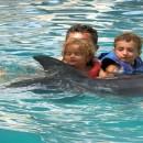dolphin_swimming_9 (Копировать)